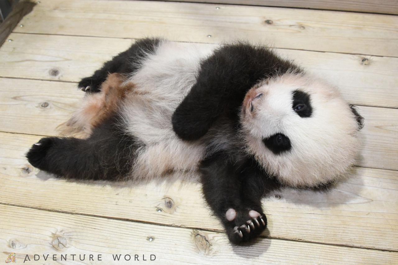 球 パンダ 肉 パンダが笹を食べる理由と食生活の実態