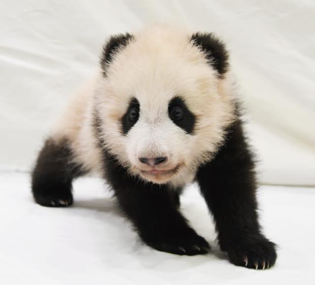 https://www.aws-s.com/panda-baby-ticket/assets/img/pict_main-visual.jpg